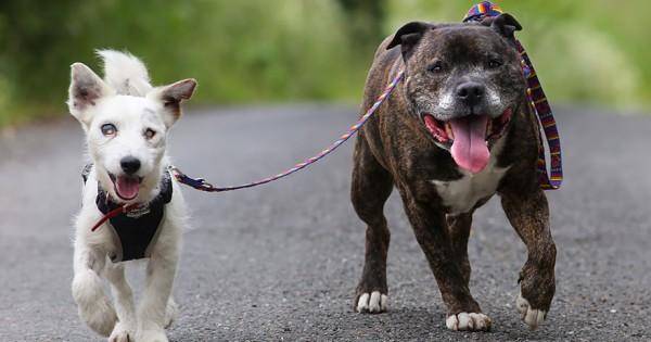 Αυτό το τυφλό σκυλάκι έχει τον δικό του φύλακα άγγελο! (Φωτο+Βίντεο)