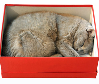 Γιατί η γάτα μου κοιμάται σε άβολα, στενά μέρη;