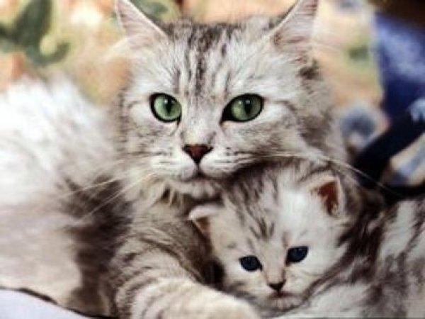 μωρό γατάκι Γάτα