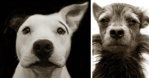 Συγκινητικά πορτραίτα από αδέσποτα σκυλιά που περιμένουν να τα υιοθετήσουν