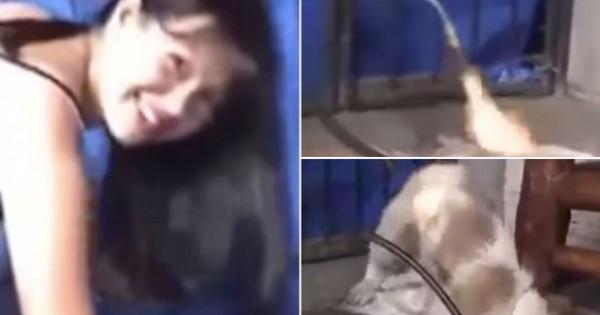 ΦΡΙΚΗ! Βασανίζει μέχρι θανάτου κουτάβι με… καμινέτο! (βίντεο)