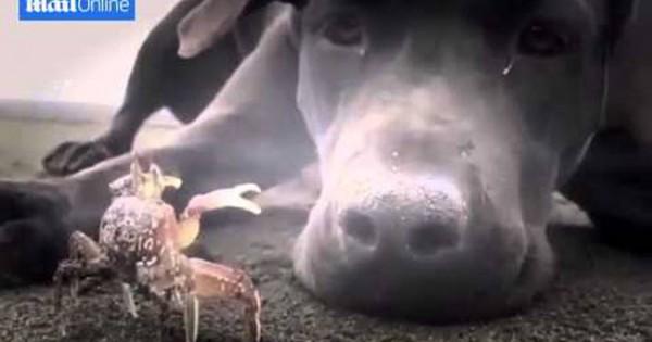 Σκύλος ανακαλύπτει καβούρι και αποφασίζει να… (video)