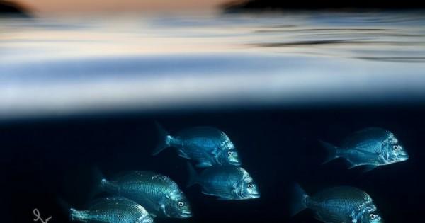 Φωτογράφος καταγράφει με μαγικό τρόπο τη ζωή πάνω και κάτω από την θάλασσα!