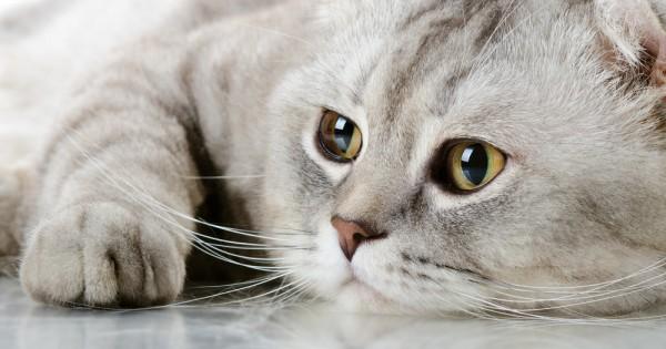 Οι 3 κυριότερες δερματικές διαταραχές στη γάτα