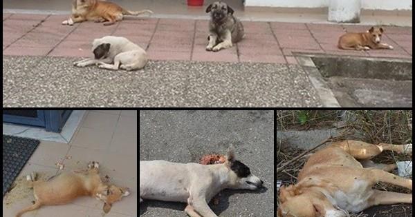 Δηλητηρίασαν σκυλάκια σε εγκαταστάσεις εφημερίδας