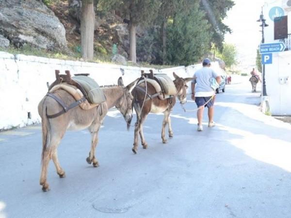 γαϊδουρια αριθμός κυκλοφορίας άλογα