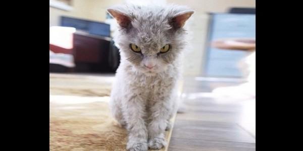 Λένε πως είναι ο γάτος με το πιο άγριο βλέμμα στον κόσμο. Αν δείτε τις φωτογραφίες θα καταλάβετε γιατί…