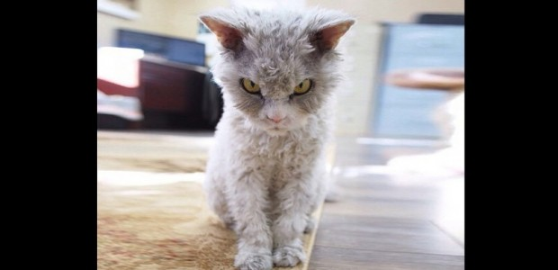 γάτος βλέμμα