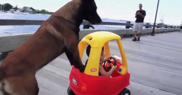 Αυτός ο σκύλος βγάζει βόλτα το μωρό!!! (Βίντεο)
