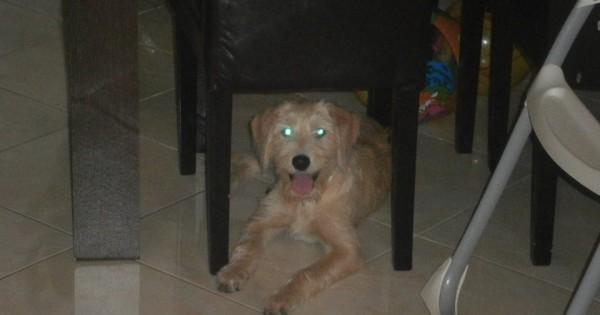 Χάθηκε σκυλίτσα από Ανω Πάτημα Χαλανδρίου