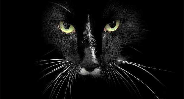μουστάκια Γάτα
