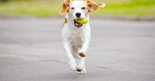Πώς να προστατέψεις τις πατούσες του σκύλου σου τους καλοκαιρινούς μήνες