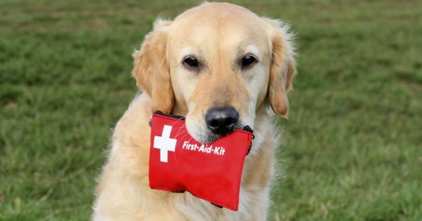 Φτιάξε κουτί πρώτων βοηθειών για το σκύλο σου!