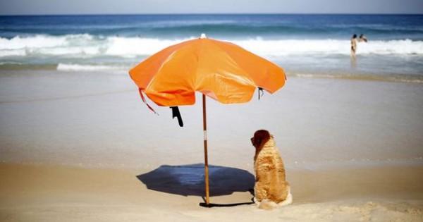 Πώς να προστατέψεις τον σκύλο σου από τη ζέστη. Τι πρέπει και τι δεν πρέπει να κάνεις