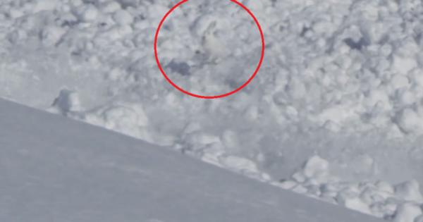 Εντυπωσιακό βίντεο δείχνει ένα κουνέλι να βγαίνει ζωντανό μέσα από χιονοστιβάδα