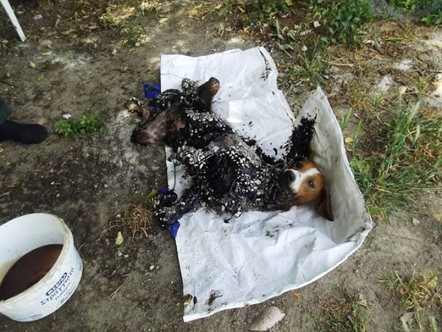 Σκύλος σκυλίτσα Σέρρες πίσσα