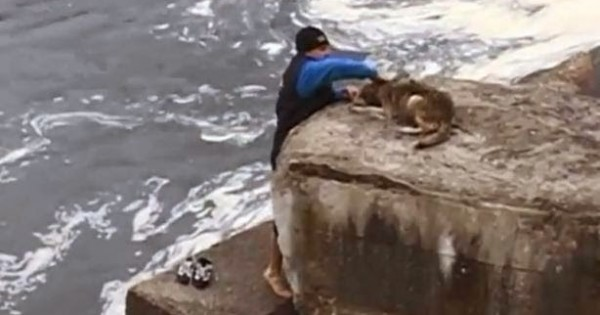 Συγκλονιστικό – Πως λέει «ευχαριστώ» ένας αδέσποτος σκύλος στον άνθρωπο που τον έσωσε [video]