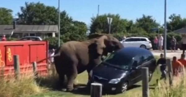 Η εκδίκηση του ελέφαντα: Τον κακοποιούσαν σε τσίρκο μέχρι που αγρίεψε και τα ισοπέδωσε όλα! (βίντεο)