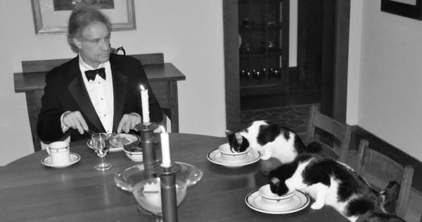 Όταν η γυναίκα του πάει διακοπές μόνη της, εκείνος κάνει πάρτι με τις γάτες του! (Εικόνες)
