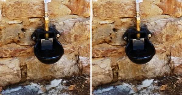 Δήμος Κηφισιάς: Τοποθετεί ποτίστρες για τα αδέσποτα