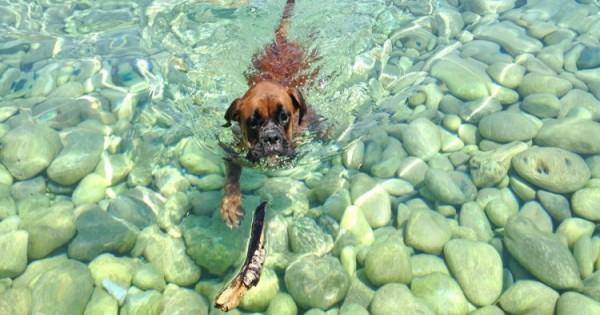 Χαλκίδα: Απαγορεύονται Τα Σκυλάκια Στις Παραλίες Με Γαλάζιες Σημαίες