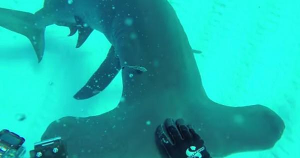 Διάσημος κινηματογραφιστής τοποθετεί μια κάμερα στο πτερύγιο ενός καρχαρία… Το θέαμα μαγικό! (Βίντεο)