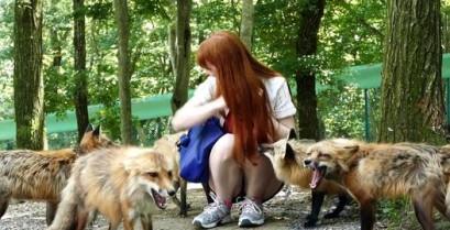Το χωριό των αλεπούδων στην Ιαπωνία (Βίντεο)