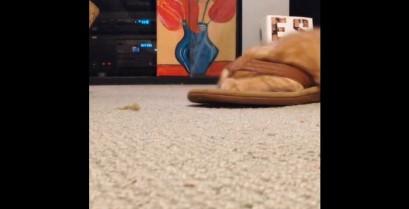 Η γάτα της σαγιονάρας (Βίντεο)