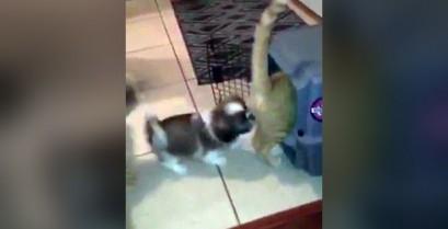 Το κουτάβι κλείδωσε τη γάτα στο κλουβί (Βίντεο)