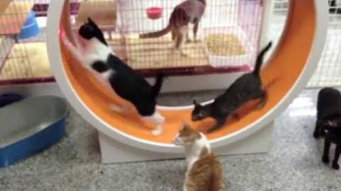 Τροχός γυμναστικής για γάτες (Βίντεο)
