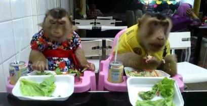 Δύο μαϊμούδες στο εστιατόριο (Βίντεο)
