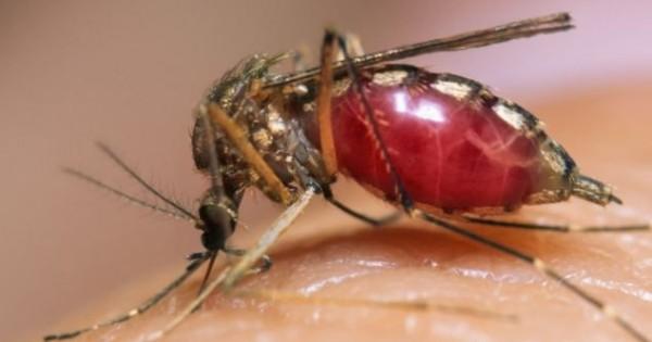 AIDS: Μπορούν τα κουνούπια να μεταδώσουν τον ιό HIV;