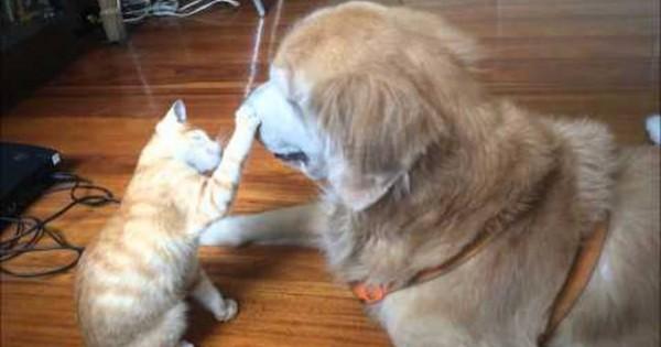 Σαν τη γάτα με το σκύλο… αλλά καμία σχέση (video)