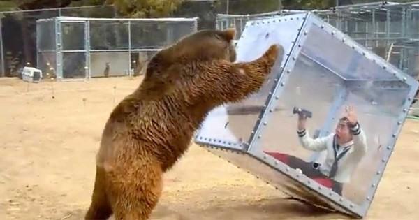 Γυναίκα κρύβεται σε ένα γυάλινο κουτί και γίνεται παιχνίδι στα χέρια πεινασμένης αρκούδας! (Βίντεο)