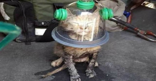 Πυροσβέστες ανακάλυψαν γάτα στα πρόθυρα του θανάτου, ευτυχώς όμως ήταν προετοιμασμένοι…(Εικόνες)