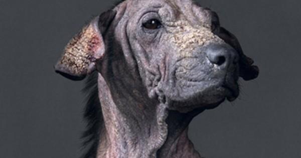 Συγκινητικά πορτρέτα σκύλων πριν την ευθανασία (Εικόνες)