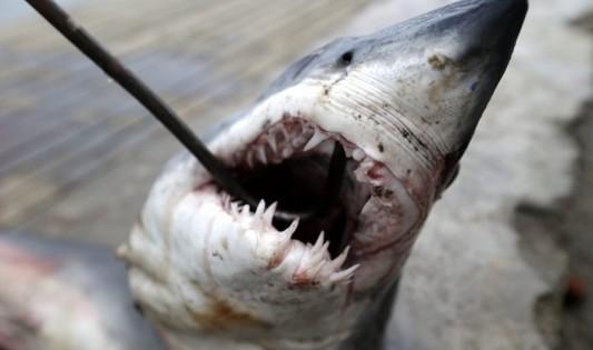 Τον δάγκωσε καρχαρίας, του έριξε μπουνιές και σώθηκε! (Εικόνες)