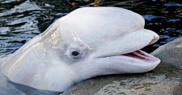 Δείτε την απίστευτη φάλαινα που ξέρει πως να σας… δροσίζει! [εικόνες]