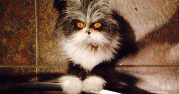 Η γατα με το βλεμμα που στοιχιωνει τα ονειρα σου!! (20 φωτογραφιες)