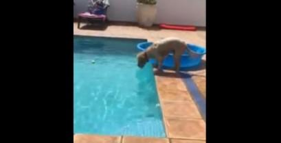 Ένας έξυπνος σκύλος πιάνει τη μπάλα του από το νερό (Βίντεο)