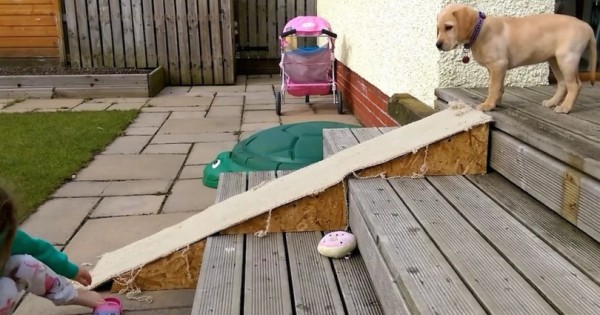 Το κουτάβι φοβάται να κατέβει την τσουλήθρα! Δείτε όμως τι σκαρφίζεται! (Βίντεο)