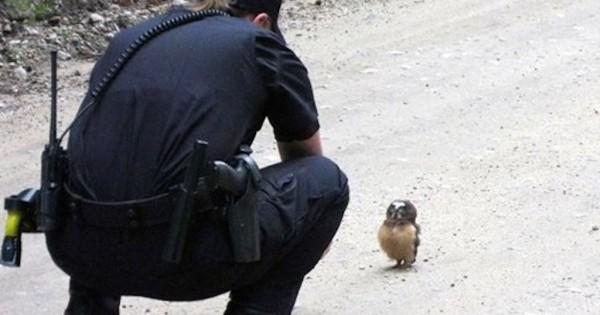 Αστυνομικός βιντεοσκοπεί μια μικρή κουκουβάγια. Θα χαμογελάσετε! (Βίντεο)