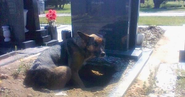 Δείτε το μυστικό που έκρυβε ο πιστός σκύλος που ζούσε στον τάφο του ιδιοκτήτη του! (Εικόνες)