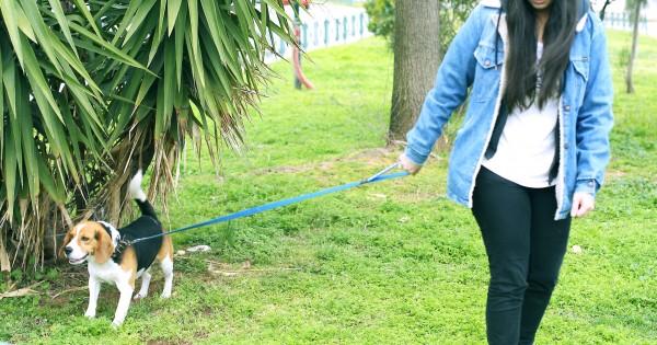 Beagle: ένας αεικίνητος και πάντοτε χαρούμενος φίλος