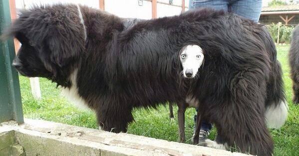 37 φωτογραφίες που αποδεικνύουν ότι και τα σκυλιά νιώθουν άβολα! (Εικόνες)