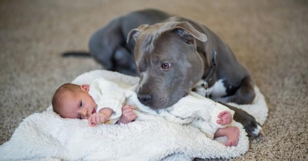 Όταν είπε στη γυναίκα του ότι πρέπει να δώσουν το pitbull, το σκυλάκι έκανε κάτι ΜΟΝΑΔΙΚΟ! (Εικόνες)
