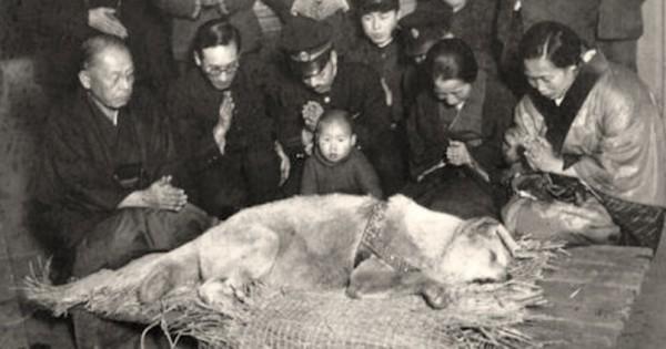 Πριν από 100 χρόνια περίπου, χιλιάδες άνθρωποι θρήνησαν για το θάνατο αυτού του σκύλου… (Βίντεο)