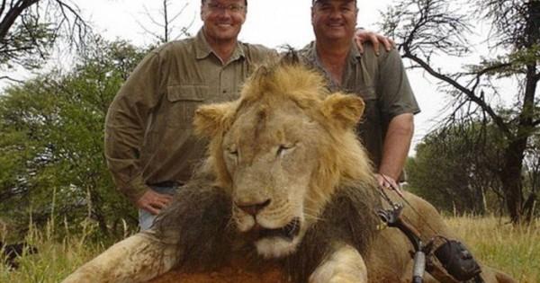 «Ανθρώπινο σκουπίδι» ο φονιάς του λιονταριού της Ζιμπάμπουε (pics)