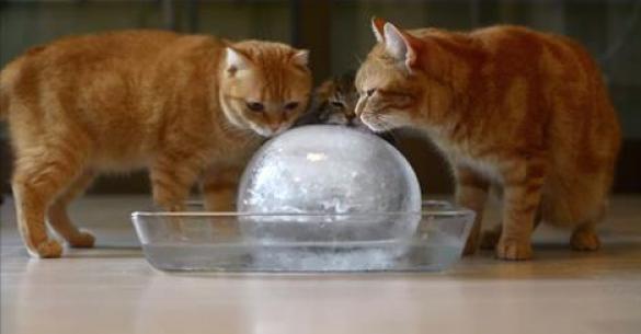 10 Γάτες και μια παγωμένη μπάλα…. Ότι καλύτερο για τις ζεστές μέρες του καλοκαιριού. (Βίντεο)