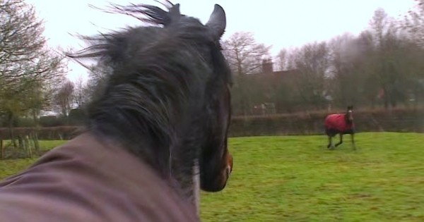 Αυτά τα 3 άλογα μεγάλωσαν μαζί, αλλά χάθηκαν για 3 ολόκληρα χρόνια. Η στιγμή της επανασύνδεσης; ΑΝΕΚΤΙΜΗΤΗ! (Βίντεο)